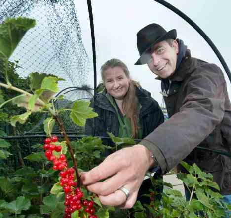 Simon Gregson picking red currants for Growing Newsome