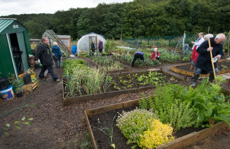 Growing Newsome Community Allotment