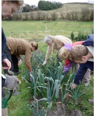 Gardeners at the Stirley veg beds, squeezing leek stems