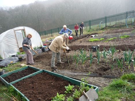 people gardening at our community allotment