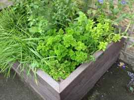 Herb planter outside Raymon Carroll butcher's shop, Newsome