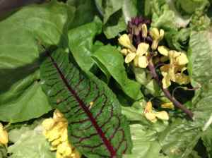 selection of salad leaves