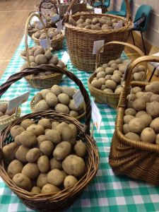 baskets of seed potatoes