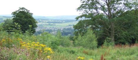 woodland landscape at Upper Park Wood