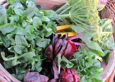 basket of vegetables grown at Stirley Farm