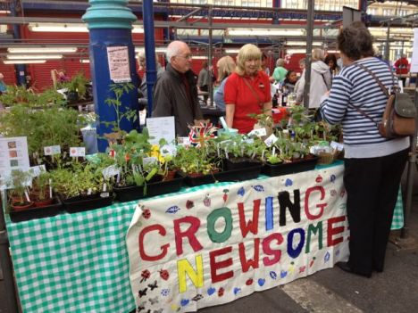 Growing Newsome plant stall