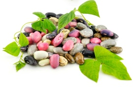 mixed bean seeds