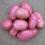 Sarpo Mira potatoes