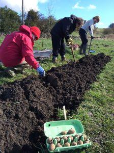 planting veg beds