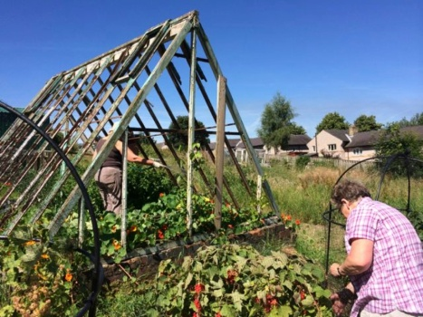 picking fruit at the allotment