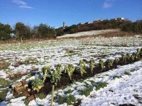 Stirley Farm in the snow