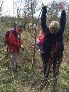 fruit pruning at the community orchard