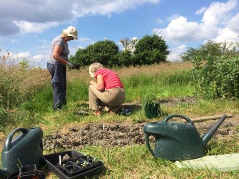 Gardening at Stirley Farm in Summer