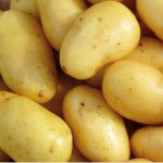Jazzy seed potatoes