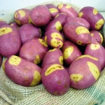 Pink Gypsy potatoes