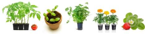 seedlings and plants