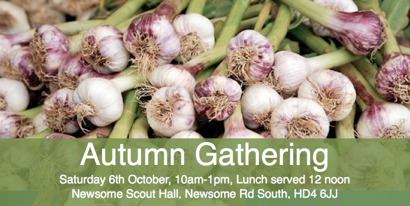 Garlic bulbs for planting