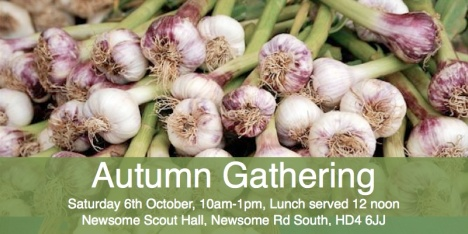 Garlic bulbs for planting