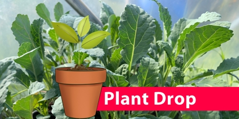 plant drop