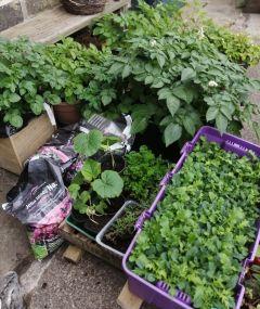 veg plants
