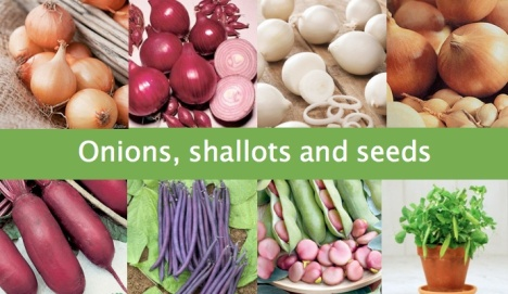 Onions, shallots and seeds